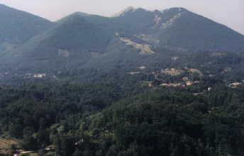 Panorama-cardito